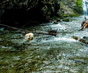 alaska, dogs, and waterfalls image