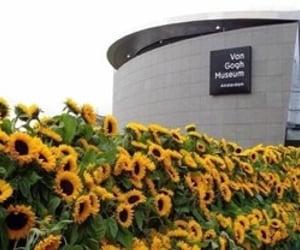amsterdam, 125000 sunflowers, and anniversary image