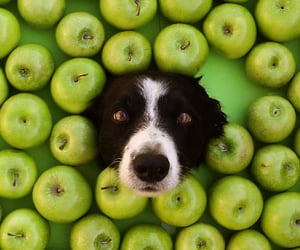 animals, dogs, and apples image