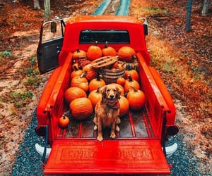 autumn, pumpkin, and dog image