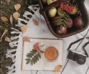 apples, autumn, and book image