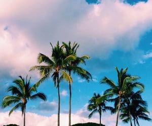 beach, beautiful, and palm trees image