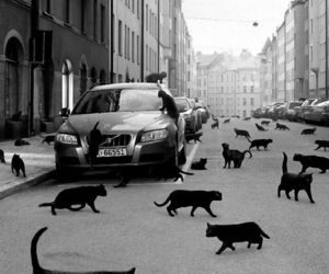 black, black cat, and car image