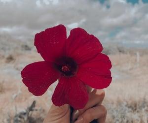 autoral, e, and flourish image