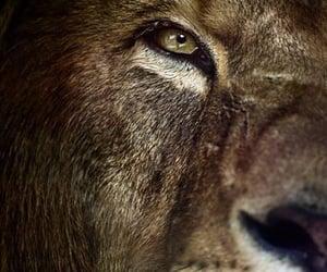 Animales, mirada, and rey image