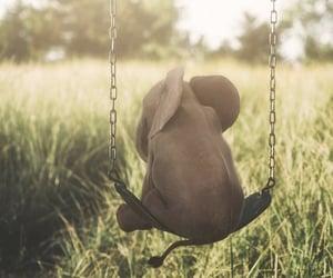 animal, elefant, and nature image