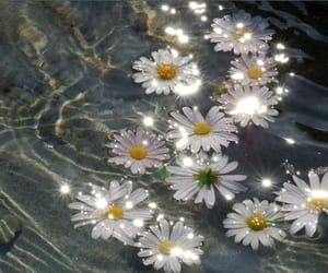 article, daisies, and fiction image