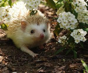 hedgehog, animal, and flowers image