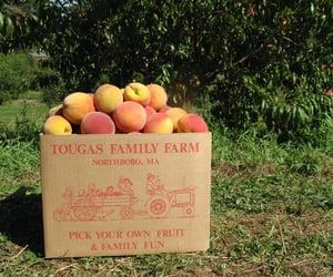 food, peach, and farmcore image