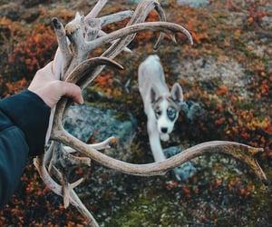antler, atumn, and beautiful image