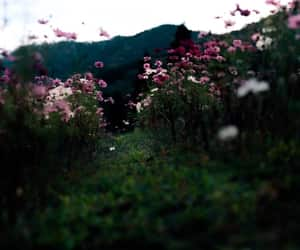 aesthetic, field, and flowers image