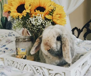 bunnies, bunny, and flowers image
