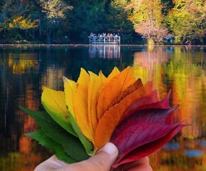 autumn, leaves, and colors image