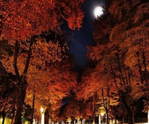 moon, autumn, and nature image