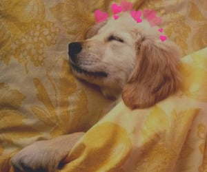 adorable, dogs, and sleep image