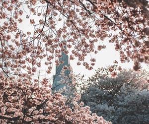 beautiful, fantasy, and pink image