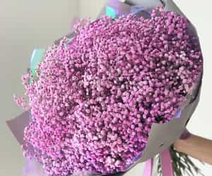 bloom, pink, and blossom image