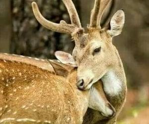 Animales, belleza, and ciervos image