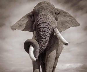 Animales, blanco y negro, and elefante image