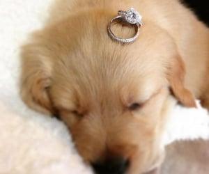dog, puppy, and diamond image