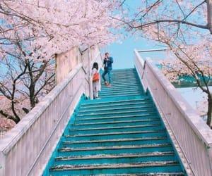 cherry blossoms, flowers, and sakura image