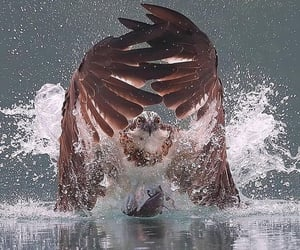animals, eagle, and photography image