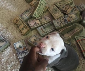 money, dog, and puppy image