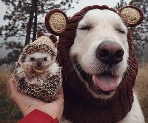 animals, hedgehog, and dog image