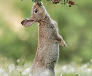 animals, flowers, and garden image