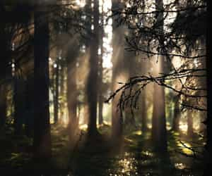 forest, light, and moss image