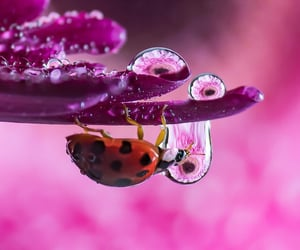 aesthetic, animals, and insects image