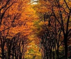 autumn, nature, and photograpy image