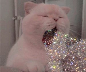 cat, alternative, and glitter image