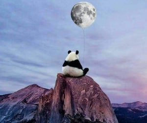 animal, panda, and love image