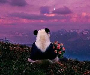animals, love, and panda image