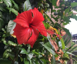 autoral, photography, and flowers image