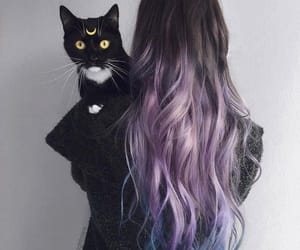cat, grunge, and hair image
