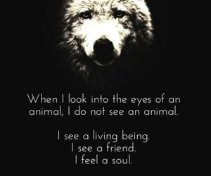 quote, quotes, and wolves image
