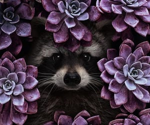 flowers, plants, and animal image