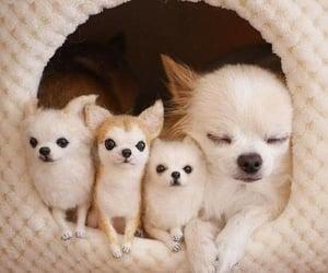 animal, pet, and cutie image