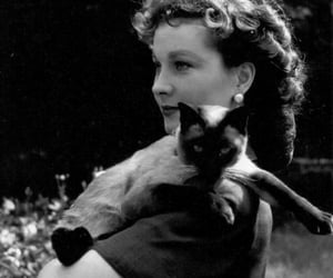 cat, black and white, and vivien leigh image