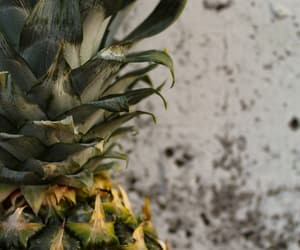 ananas, photography, and background image