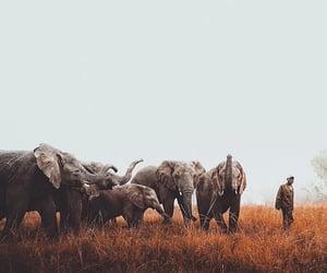 animal, photo, and animals image