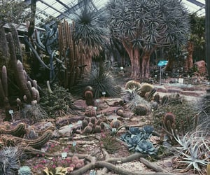 blue, botanical, and cactus image