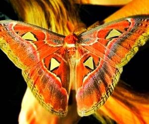 wings, atlas moth, and dubai butterfly garden image