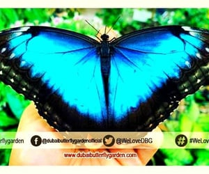 dubai butterfly garden and ticket instructions image