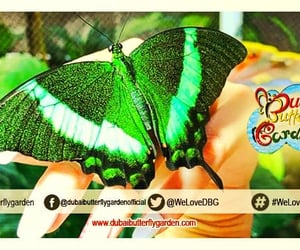 ticket price, ticket instructions, and dubai butterfly garden image