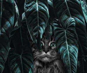 animal, cat, and karen image