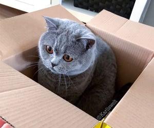 animals, cardboard box, and cat image