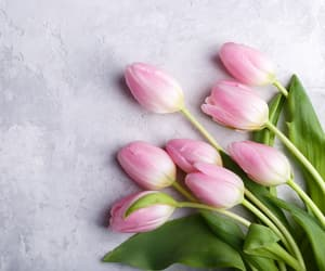 flores and tulipanes image